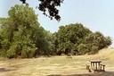 Picnic Tables near Putah Creek