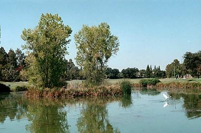 Bird and Pond