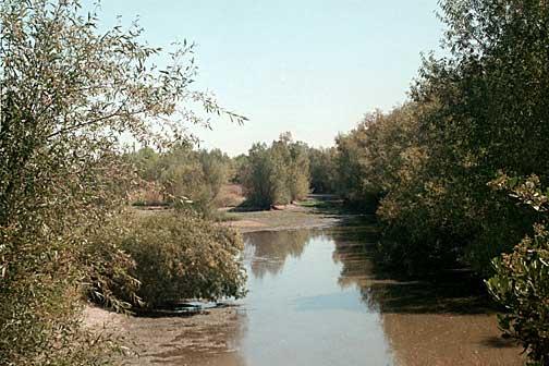 North Area Pond